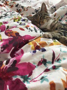 mufassa-and-bedspread